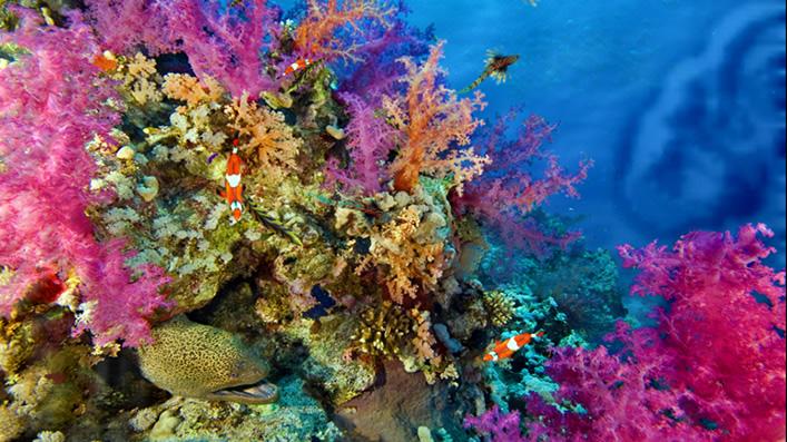 サンゴ礁 オミビスタ
